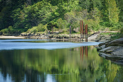 Nanaimo River (Carrie Cole Photography) Tags: reflection sunshine bc nanaimo pilings nanaimoriver carriecole