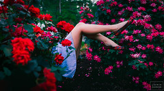off with her head (lauren zaknoun) Tags: flowers roses nature girl fairytale dark surreal aliceinwonderland darkphotography queenofhearts lewiscarrol surrealphotography
