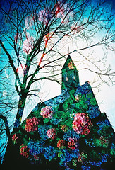 紫陽花の丘 -a hill of hydrangea (Hodaka Yamamoto) Tags: flower film church silhouette spring lomo lca lomography crossprocessed xprocess doubleexposure crossprocess hill chapel double lomolca multipleexposure highland crossprocessing hydrangea filmcamera doubles multiexposure filmphotography