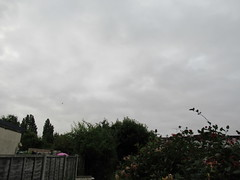 Wednesday, 27th, Cloud cover IMG_3186 (tomylees) Tags: essex morning summer 27th july 2016 wednesday weather