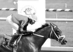 2016-07-15 (43) r2 Alex Cintron on #7 Cool Arrow (JLeeFleenor) Tags: photos photography md maryland marylandhorseracing outside outdoors bw blackwhite monochrome jockey   jinete  dokej jocheu  jquei okej kilparatsastaja rennreiter fantino    jokey ngi horses thoroughbreds equine equestrian cheval cavalo cavallo cavall caballo pferd paard perd hevonen hest hestur cal kon konj beygir capall ceffyl cuddy yarraman faras alogo soos kuda uma pfeerd koin    hst     ko