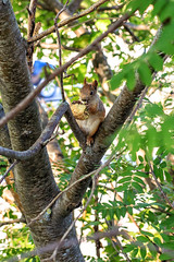 FIN_198 - Kemijrvi (Viaggiatore Fantasma Summer Tour 2016 - CH-LI-AT) Tags: canon 5d finlandia finland suomi lapponia lapland lappland scoiattolo squirrel eichhrnchen kemijrvi citt city stadt