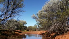 billabong (ClareSnow) Tags: winter water creek cue australia outback billabong acacia arid reddirt mulga mulgacountry dairywells mulgascrub