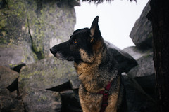 IMG_4079.jpg (Backpacking With Bacon) Tags: washington northerncascades hiking mtpilchuck granitefalls unitedstates us