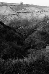 New Horizons (Richie Rue) Tags: nikond300 outdoors landscape mono monochrome blackandwhite moor moorland trees tree hill steep light shadow