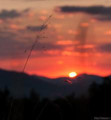 elegance () Tags: sunset light colors oreshak bulgaria home