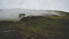 Well, I've been watching while you've been coughing (g a b r i e l l e s w i n d l e h u r s t) Tags: scotland summer trossachs national park glencoe mist rabbies tours