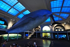 Milstein Family Hall of Ocean Life (markusOulehla) Tags: americanmuseumofnaturalhistory nyc newyorkcity markusoulehla nikond90 citytrip thebigapple usa manhattan