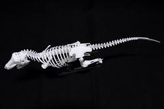 IMG_6871 (Barman76) Tags: bonelab trex tyrannosaur skeleton plastic laser cut