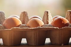 14/32 #Breakfast #FlickrFriday (carlamgk) Tags: morning sunlight macro breakfast eggs hens fresheggs flickrfriday
