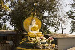 Budha and Naga