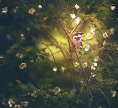 bird theme in romantic style (irina_escoffery) Tags:
