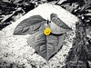 Color is Life (roizroiz) Tags: bw plants flower nature beautiful yellow flor lovely today mothernature selectivecolor i500 colorislife