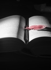 Its been a long day without you my friend. (Andrea_Dambrosio) Tags: rose reading iso200 photo nikon flickr colore jobs steve like bn read 25 asa perso bianco tempo nero d800 70mm rosse diaframma 2485mm secondi f140 focale sbiadite nikonphoto d800e