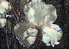 IrisDream (Bugldy99) Tags: iris photomanipulation manipulated surrealism surreal manipulation photomanipulated dreamscope photosurrealism fotosurrealism