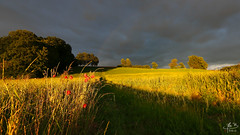 rayons dors (MB*photo) Tags: sunset sky landscape switzerland soleil countryside suisse champs ciel campagne orage coucherdesoleil rayons vaud lemont coquelicots romandie wwwifmbch