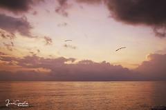 Todas las maanas... (jonigarcia) Tags: amanecer aves gaviotas sol mar arena agua nubes azul cielo rojo maana naturaleza paisaje photography beautiful sun sky sea dird