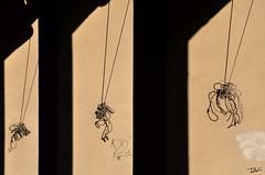 (Pau Pumarola) Tags: ombra sombra ombre shadow schatten minimalisme minimalismo minimalism minimalismus
