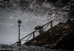 umbrella reflection (rmaka) Tags: mars paris pontdesarts 2016 d600