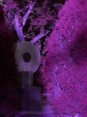 Oracolo nella foresta (Lovecraft 77) Tags: alberi weird notte foresta strana celtica astrattismo
