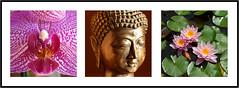 Zenitude - (diaph76) Tags: statuette bouddha buddha fleurs flowers triptyque triptych orchide nymphas