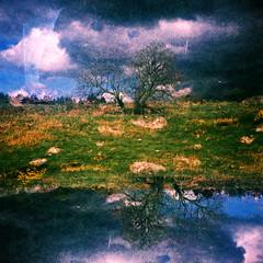 Trees (megalithicmatt) Tags: tree multiple xpro frankasolidaiii ektachromepanther100 expired eslie mulloch