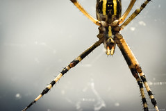 / spider (March Hare1145) Tags: insect spider