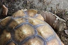 tortoise (THinLou) Tags: animals louisvillezoo