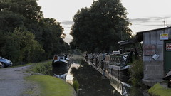 Brinklow Canal Walk 14th August 2016 (boddle (Steve Hart)) Tags: brinklow canal walk 14th august 2016 steve hart boddle steven bruce wyke road wyken coventry united kingdon england great britain canon 6d 100400mm is usm ii 24105mm standard 815mm fisheyes lens 1635mm l wideangle wide angle 100mm prime macro laowa 15mm f4 11 wild wilds wildlife life nature natural bird birds flowers flower fungii fungus insect insects spiders butterfly moth butterflies moths creepy crawley winter spring summer autumn seasons