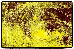 garden worm hole... (DjD-567) Tags: thebestyellow flowers webster nh hipstamtic multiexposure iphone