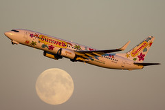 Transavia Neckermann livery overflying the moon. (rhietbrink) Tags: transavia b7378k2 phhsd neckerman b737 b738 boeing moon take off departure sunset moonrise amsterdam schiphol airplane