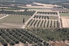 Mesara (ramosblancor) Tags: humanos humans naturaleza nature paisaje landscape cultivos crops cultivations olivares olivegroves frtil fertile llanura plain mesara creta crete grecia greece