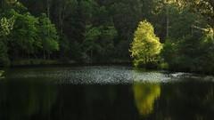 Dbut de randonne...8 heures du matin (paninho) Tags: serradaestrela seia portugal senhora do desterro agua eau espelhos reflets arbre nature natureza arvore