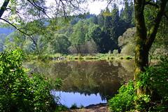 Ilz River (ivlys) Tags: germany allemagne deutschland bayern bayerischerwald bavarianforest ilz fluss river landschaft landscape spiegelung reflection nature ivlys