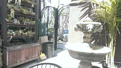 Heaven coffee spot. (clascaris) Tags: oceanside splashingwater succulentcafe