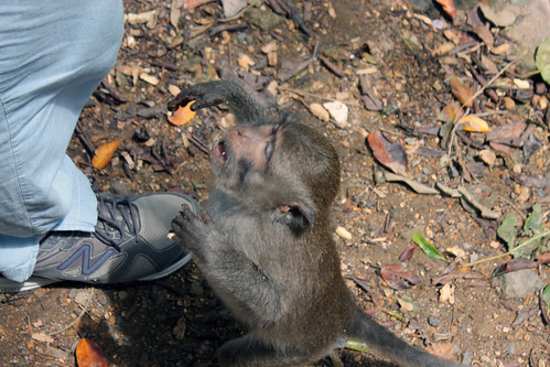 20150224_110248 Pusuk Monkey Forest, Lombok