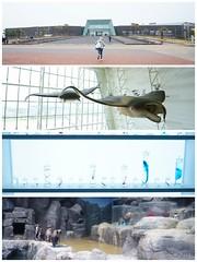 Aqua Planet JEJU 1 (Shun Daddy) Tags: travel landscape spring sony wide korea full frame 20mm fe jeju ultra ff f28 a7    2015   mirrorless