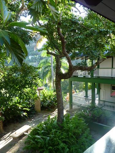 Jayuya, Hacienda Gripinas (2)
