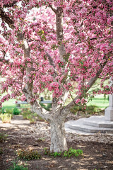 Blooms are in season (BrettAnderson_) Tags: pink flowers red white tree minnesota canon drive memorial zoom mark iii blossoms minneapolis telephoto bloom 5d tamron mn vc 70200