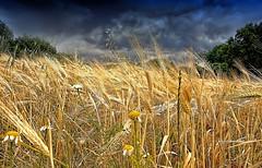_afternoon turbulent_ (* landscape photographer *) Tags: italy primavera europe nuvole campo pioggia paesaggio maggio vento lucania 2015 pomeriggio nikond90 turbolento salvyitaly