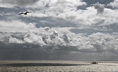 Coming Home (nokkie1) Tags: sea sky cloud sun holland bird water netherlands monochrome rain waddenzee seagull fishermanboat ferrytovlieland