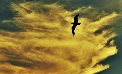 Sunset Clouds and a Seagull