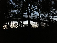 Shiluettes in the woods #night #dark #shiluette #bridge #wood #transylvania #sunrise #iphone6s (nagymarci14) Tags: night dark shiluette bridge wood transylvania sunrise iphone6s