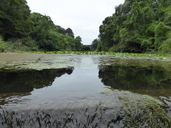 Bridges of Pembroke County 1 (chrisinwales) Tags: pembrokeshire waterlilies bridges wales