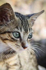 Cuteness overload (judi may) Tags: menorca kitten cute adorable thoseears ears eyes dof bokeh tabby tabbykitten whiskers