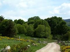 La barrire (brigeham34) Tags: rando cheminsdecompostelle viapodiensis gr65 saugueslesauvage paysage campagne champsetptures boisetforts gents chemin domainelesauvage barrire margeride chanaleilles hauteloire auvergne france fz45 eu