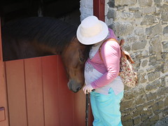 Horse snuggle (Cefn Ila) Tags: horse snuggle affection farm cuddle ceredigion llanerchaeron