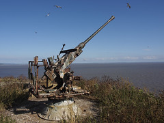 23_07_2016_1227 (andysuttonphotography) Tags: gulls old cannon steep holm flight sunny blue sky island sea isle gun emplacement fort fortification war military bristol channel rusty
