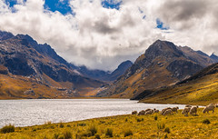 Lake querococha II (1 van 1)-2 (P-B-fotografie) Tags: huaraz mountains lake landscape peru wildlife water clouds sheep querococha ancash gold andes absolutelystunningscapes