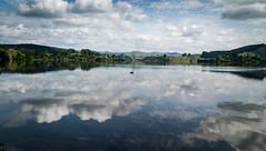 The Black Swan (Mike_Mulcahy) Tags: leica nz m9 summarit 35mm lake tutira hawkesbay landscape swan bird